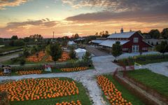 It's That Time of Year Again… Pumpkin Patch Season